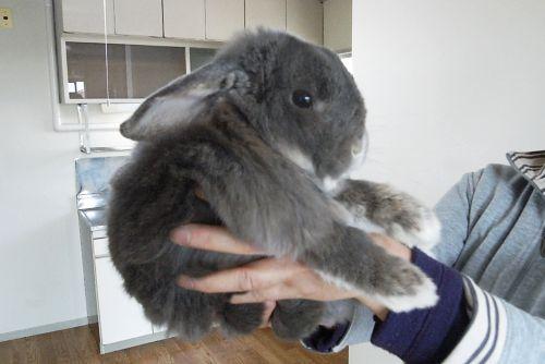 Rabbit_02